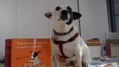 Як допомогти безпритульним тваринам та змінити свідомість людей: розповідає пес Гермес