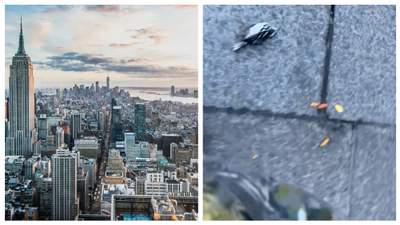 У Нью-Йорку масово гинуть птахи: зоозахисники назвали причину