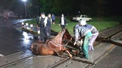 Застряг між коліями: на Волині для порятунку коня довелося зупиняти потяг