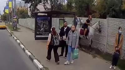 Кінь побив скляну зупинку в Харкові: відео інциденту