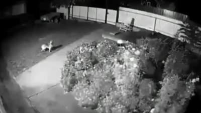 Звуки були схожі на вибухи: з'явилося відео моменту землетрусу на Тернопільщині