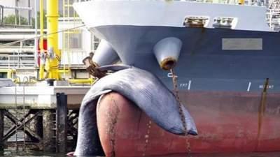 В Японии корабль причалил к гавани с огромным мертвым китом на носу