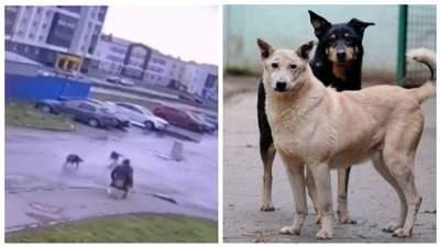 У Росії бродячі пси напали на чоловіка на візку: відео відчайдушного порятунку
