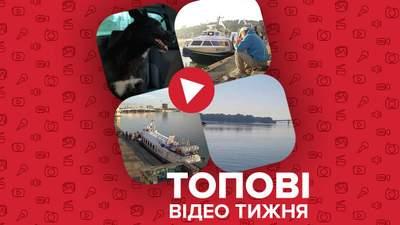 """Запуск """"Ракеты"""" по Днепру, отчаянная собака-пловец – видео недели"""