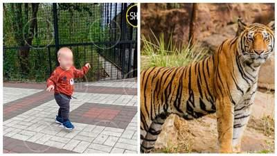 Тигр откусил палец годовалому малышу в оккупированном Крыму