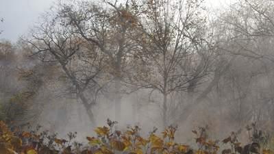 Синоптики попередили про заморозки в Україні: коли та де різко похолодає