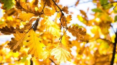 Тепло та опади в межах норми: якою буде погода у жовтні