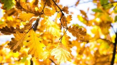 Сонячно але прохолодно: прогноз погоди на 18 жовтня
