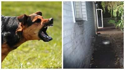 У Харкові собаки загризли літню жінку: пенсіонерка не вижила