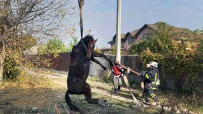 В Кривом Роге автокраном спасали лошадь, которая провалилась под землю