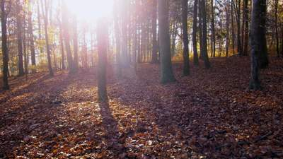В Украину идет потепление: прогноз погоды на 20 октября
