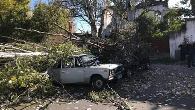 Начался деревопад в Одессе: показали последствия сильных порывов ветра