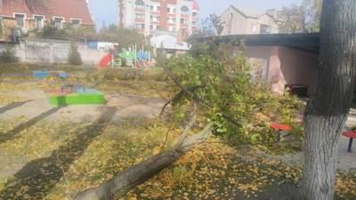 У дитсадку на Полтавщині дерево впало на дітей