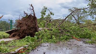 На Буковине пронесся ураган: деревья упали на дорогу и заблокировали перевал