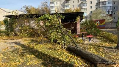 Умерла девочка, на которую в детском саду Кременчуга упало дерево