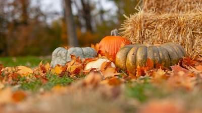 Украину охватит похолодание: прогноз погоды на 24 октября