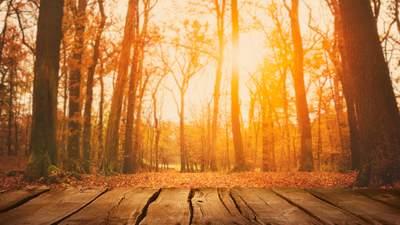 Осенняя прохлада и без осадков: прогноз погоды на 25 октября
