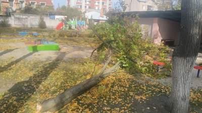 Врачи рассказали о состоянии мальчика, на которого в детском саду Кременчуга упало дерево