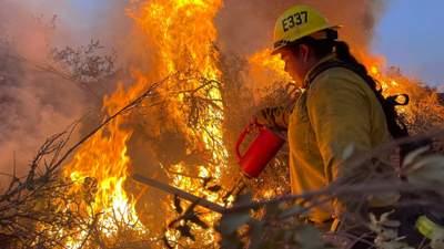 В Калифорнии придется уничтожить 10 тысяч деревьев после масштабных лесных пожаров