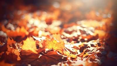 Ночи все еще с минусом, а днем до +13: прогноз погоды на 27 октября