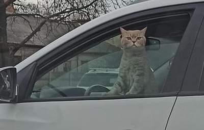 Кот был за рулем: в Киеве во время затора сделали забавное фото