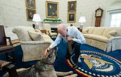 У Білому домі житиме киця: вперше за 12 років