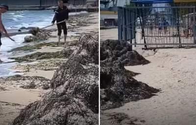 В Бердянске хотели избавиться от водорослей на пляже, выбрасывая их обратно в море: видео