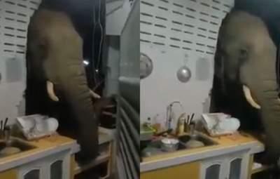 У пошуках смаколиків: слон вдерся у житловий будинок у Таїланді – відео та фото