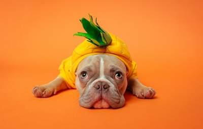 Песики vs негода: милі фото собак у дощовиках і чобітках