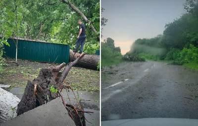 На Буковині вітер виривав дерева з корінням, зривав дахи: наслідки негоди – фото