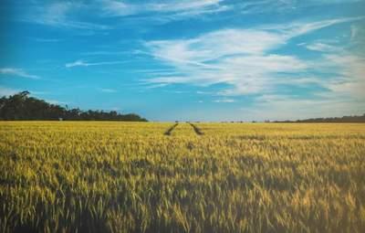 Чи варто продавати українську землю іноземцям: опитування