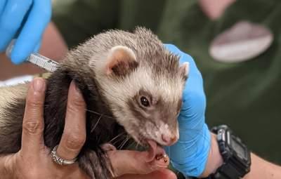 Вакцинація тварин проти коронавірусу розпочалась у США: фото