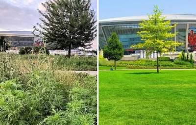 """Деревья высохли, все в сорняках: в сети показали фото парка возле """"Донбасс Арены"""""""