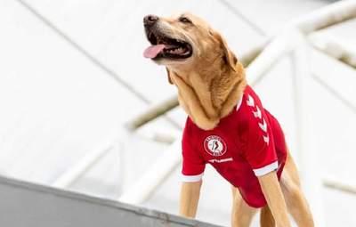Англійський клуб незвично презентував нову форму: собаки у ролі моделей – милі фото