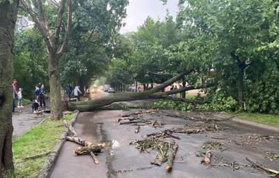 Впали сотні дерев: у Львові досі долають наслідки негоди