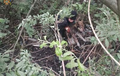 Скавчав і не міг вибратись: на Львівщині рятувальники витягли собаку з болота – фото