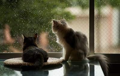 Прогноз погоди на 21 липня: дощі трохи освіжать Україну