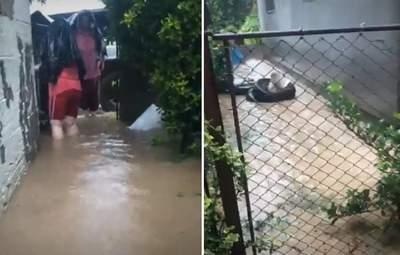 Люди стояли по коліна у воді: жахливі наслідки негоди на Закарпатті – фото, відео