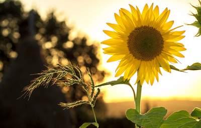 Прогноз погоди на 23 липня: в Україні знову буде сонячно й тепло