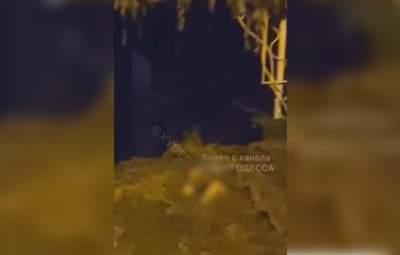 Мужчину унесло потоком воды во время ливня в Одессе: выжил ли он