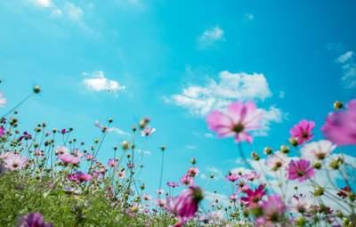 Прогноз погоды на 29 июля: Украина накроют грозы, жара до +35