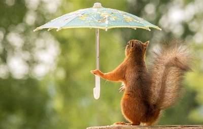 Прогноз погоди на 31 липня: в Україну прийдуть грози та спека до +32