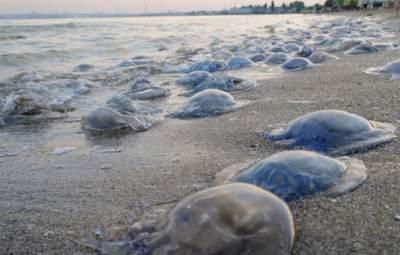Зависит от солености воды: ученый рассказал, когда медузы исчезнут из Азовского моря