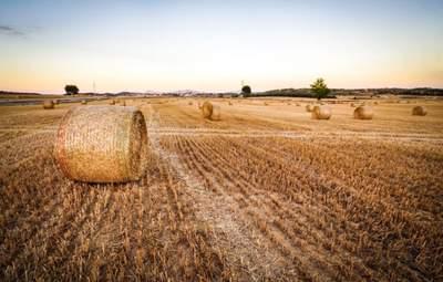 Жара с грозами – синоптики дали прогноз на первые дни августа