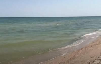 Медузи зникли, а вода тішить: туристи показали кадри з курортної Кирилівки – фото, відео