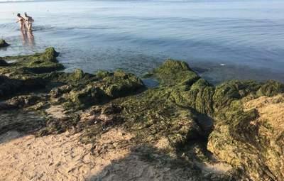 Тепер не лише медузи: пляжі Бердянська завалило тоннами водоростей – фото, відео