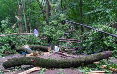 Дерево разбило лавку: во Львове во время урагана погиб курсант военной академии