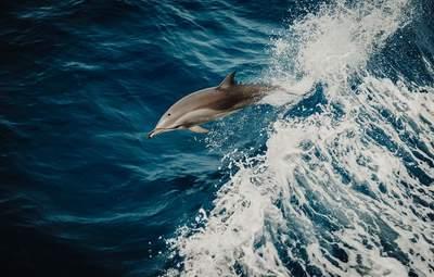 Медуз нет, есть дельфины: какова ситуация на Азовском побережье – милое видео