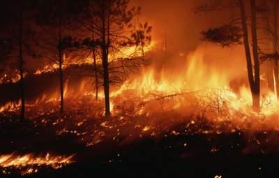 В Турции для туристов ввели запрет на посещение лесных массивов