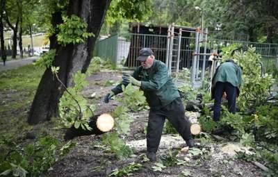 Трагедия в Стрыйском парке: предварительная причина падения дерева на молодую пару во Львове